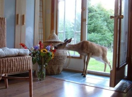 deer-flowers