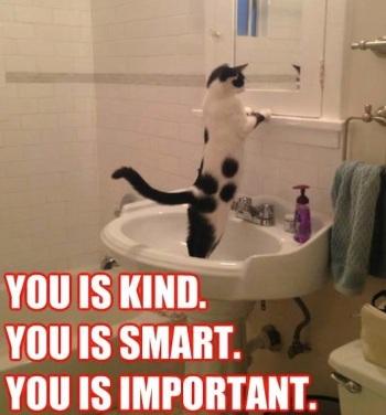 Reddit How To Get Cat To Go To Bathroom